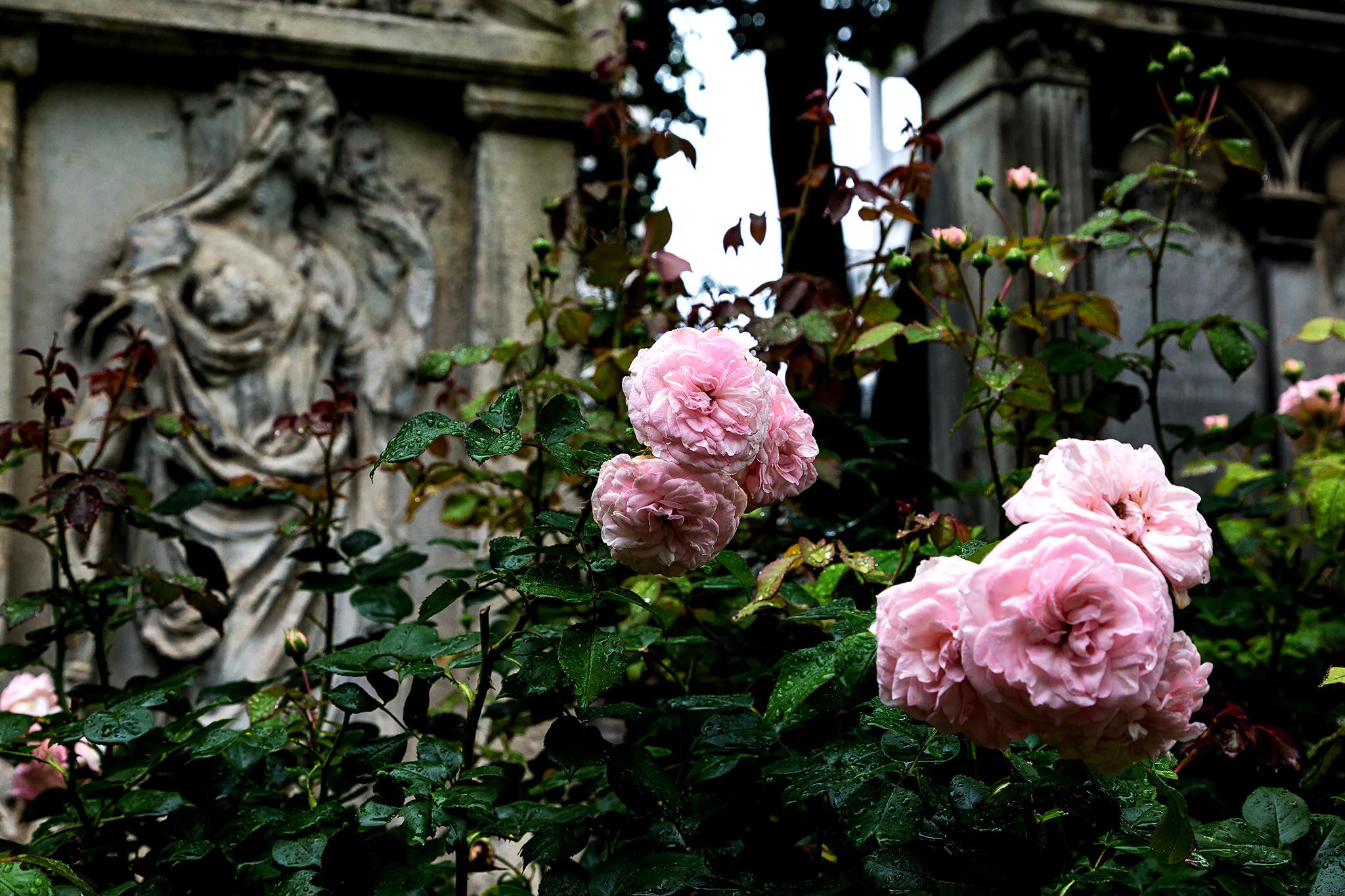 Rosen auf einem Grab