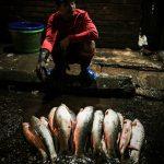 Fische auf dem Fischmarkt in Yangon