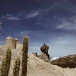 Oase in der Uyuni Salzwüste