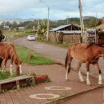 Pferde auf der Osterinsel
