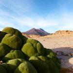 Moos Altiplano