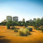 Beirut - der neu gepflanzte Park