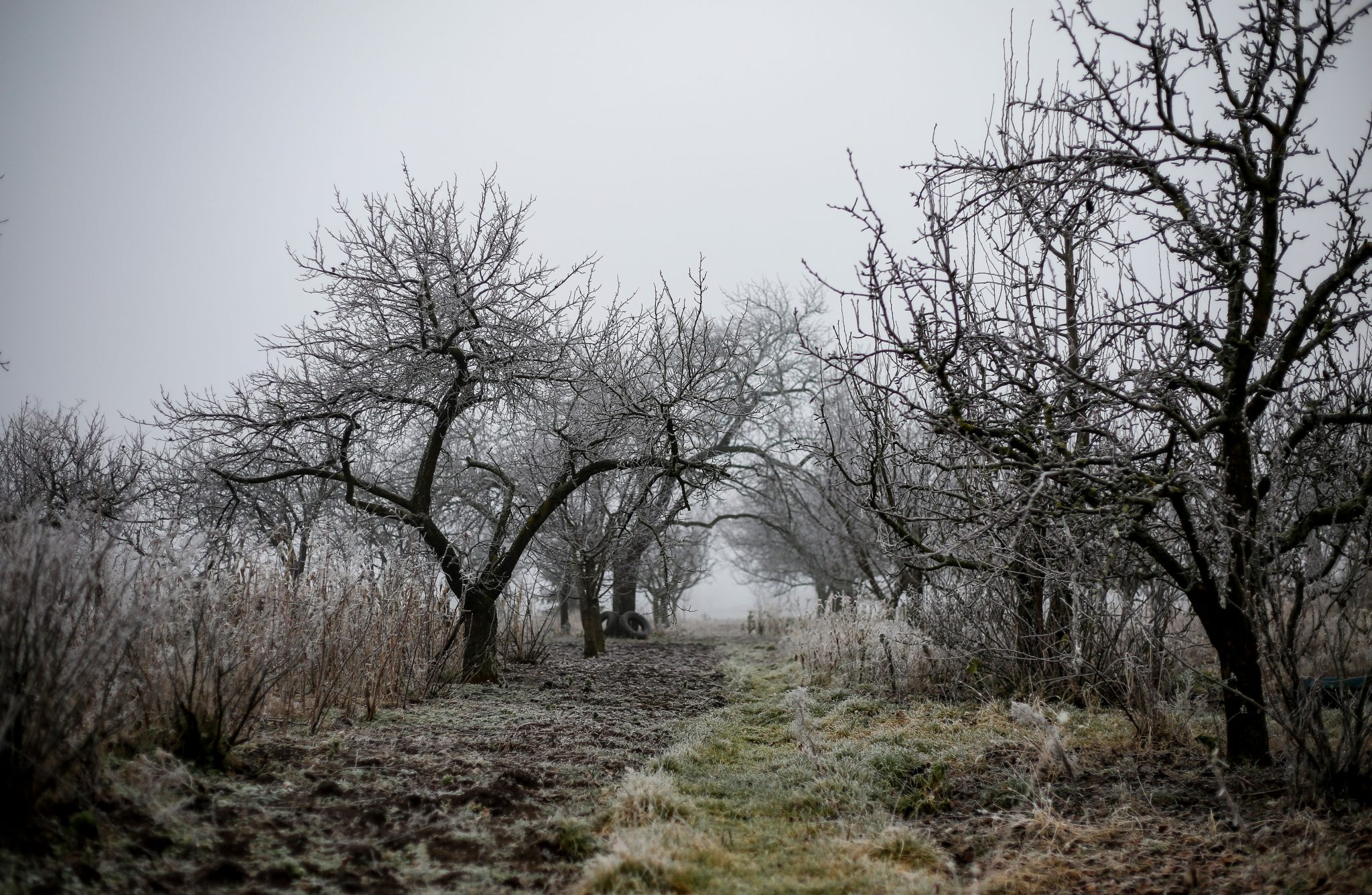 verschneiter Obstgarten